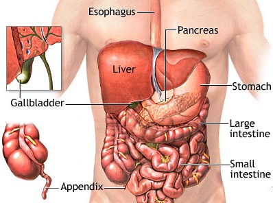 pancreas and stomach pain