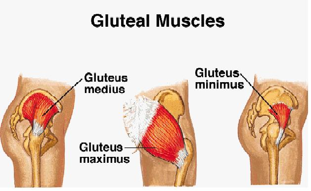 Butt Muscle Strain 43