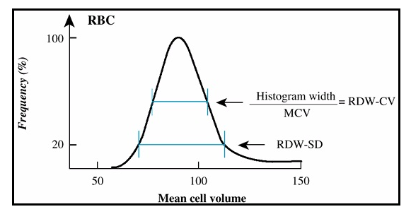 red blood cell distribution width cv and sd